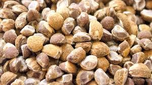 Viable Seeds