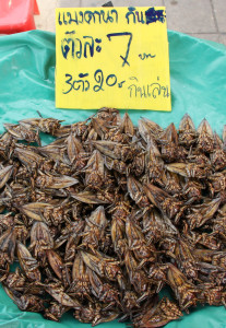 thai-water-beetle-maeng-da